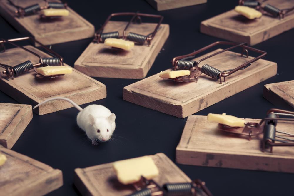 trappola per topi e web developer